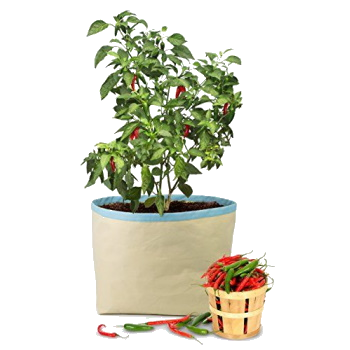 chilly grow bag